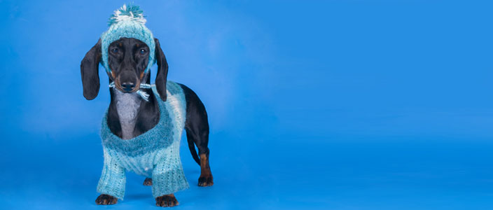 National Dress Up Your Pet Day January 14