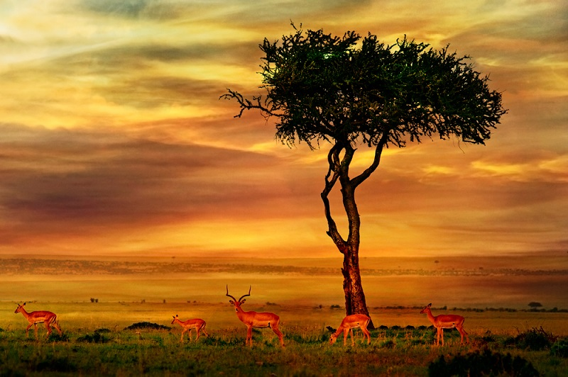 5 Amazing African Adventures to Experience