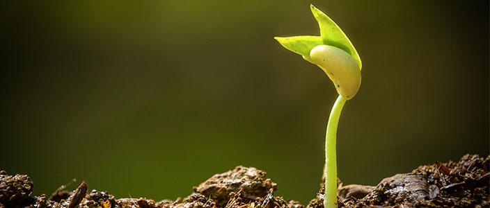 A Beginner's Guide to a Green Thumb