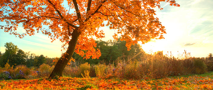 The Best Fall Foliage Destinations