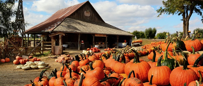 A Frugal Guide to Fun Fall Activities for the Whole Family